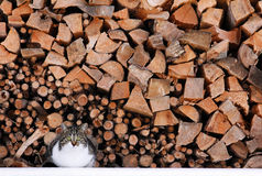 A cat before firewood Royalty Free Stock Images