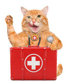 Cat with a first aid kit. Royalty Free Stock Photography