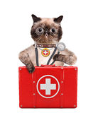 Cat with a first aid kit Stock Photos