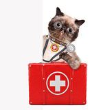 Cat with a first aid kit Royalty Free Stock Image