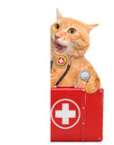 Cat with a first aid kit. Royalty Free Stock Images