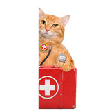 Cat with a first aid kit. Stock Image