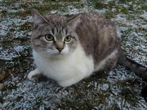 The cat and the first snow Royalty Free Stock Photography