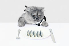 Cat and fish. Cat eating food  on white background Stock Photo