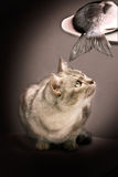 Cat and fish Stock Photography