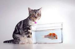 Cat with fish stock images