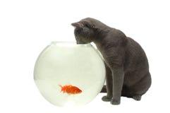 Cat and fish. Cat looking at fish in the aquarium Stock Photo