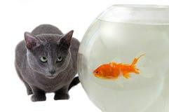 Cat and fish. Cat looking at fish in the aquarium Stock Photos
