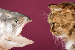 Cat and fish Stock Photo