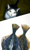 Cat and fish. Cat checking on some fish Royalty Free Stock Photography