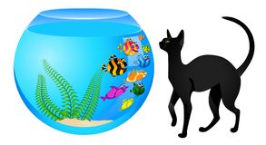 cat with  fish in aquarium Royalty Free Stock Image