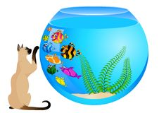 Cat with fish in aquarium Stock Images