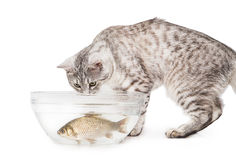 Cat fish aquarium Stock Images