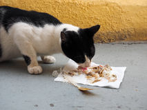 Cat and fish. Cat finishing a fish dinner Stock Image