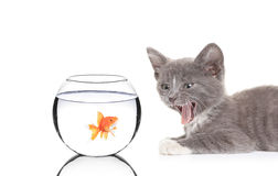 Cat and a fish in a fish bowl. Isolated on white background Royalty Free Stock Photo