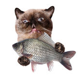 Cat with fish Royalty Free Stock Photo