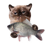Cat with fish. Stock Photos