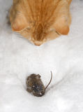 Cat fish mouse Royalty Free Stock Photography