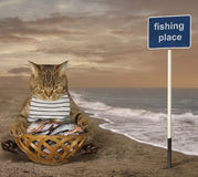 A cat fisher on the beach. Stock Images