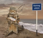 Cat fisherman 3. The cat fisher holds his catch. This is a really big fish royalty free stock photos