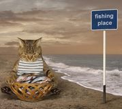 A cat fisher on the beach. A cat fisher sits beside a basket full of fish on the beach stock photo