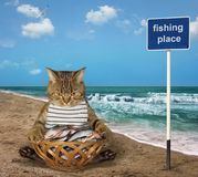 Cat fishman with basket of fish. The cat fisher sits beside a basket full of fish on the seashore royalty free stock photography