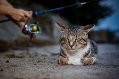 Cat and fisherman with fishing rod wheel. Cat sits and waits on the shore, fisherman with fishing rod wheel royalty free stock photos