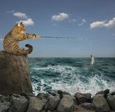 Cat fisherman on rock. The cat is sitting on the cliff and catching fish stock photos
