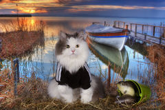 Cat fishes in a pond at sunset Stock Photo
