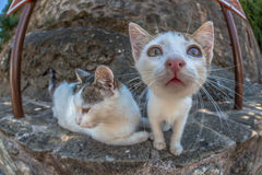 Free Cat Fisheye Looking Stock Photography - 77904382