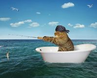 Cat is fishing on the bathtub. The cat in a bandana is fishing on the bathtub in the sea stock image