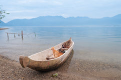 Cat in the fishing boat at Lake Maninjau Stock Photos