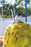 Cat and fishing net Stock Images