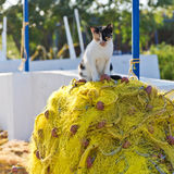 Cat and fishing net Stock Photos