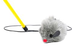 Cat Fishing Toy - Mouse on Rope with Pole. Cat fishing toy – gray mouse on rope with pole on white background Royalty Free Stock Photo