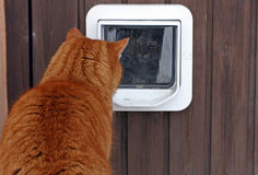 The cat flap. A curious glance from the cat flap Royalty Free Stock Image