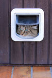 The cat flap. A cat goes by a cat's flap Stock Photography