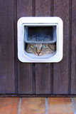 The cat flap. A cat goes by a cat's flap Royalty Free Stock Photos