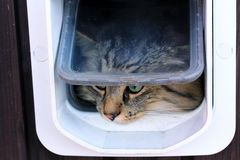 The cat flap. A cat goes by a cat's flap Stock Image