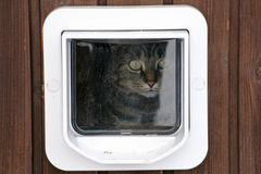 The cat flap Stock Photography