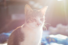 Cat and flare light Royalty Free Stock Photography