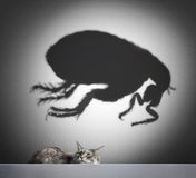 Cat and flea shadow Royalty Free Stock Photos