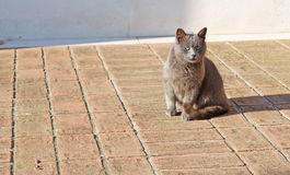 Cat on the floor Royalty Free Stock Photography