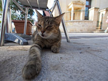 Cat on floor in Sliema Royalty Free Stock Photo