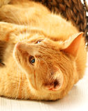 Cat on the floor in wicker basket Royalty Free Stock Image