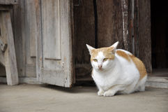 Cat Flop Wood House Look Royalty Free Stock Image