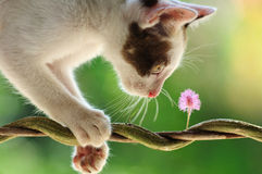 Cat and Flower Stock Photos