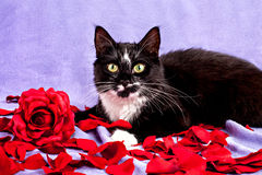 Cat with flower Royalty Free Stock Photo