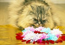 Cat and flower arrangement in the shape of a heart royalty free stock photos