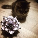 Cat and flower ball Royalty Free Stock Image